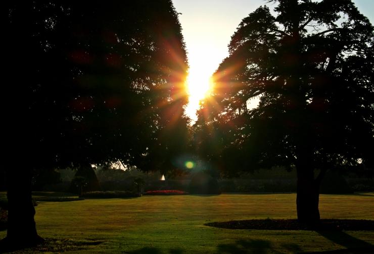 LensFlareTrees