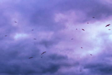 TheBirds2