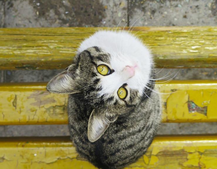 yellowcatunsplash2
