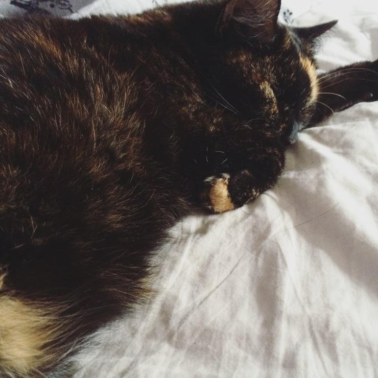Fluffy Belly
