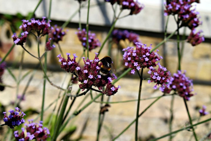 beeonflower