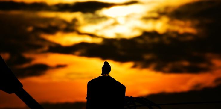 bird-sunset