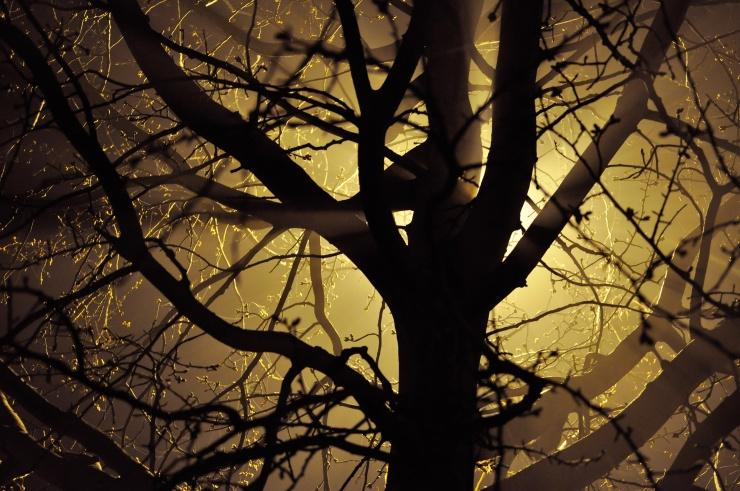 creepy-tree